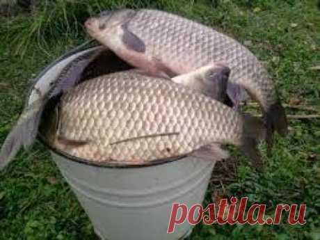 La tobera fenomenal de pesca se PEGABA. El carasio, la carpa, ahora no el problema.