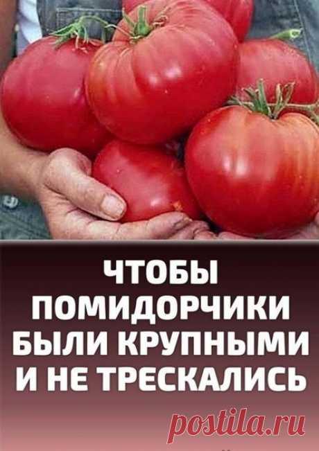 Чтобы помидорчики были крупными и не трескались.  Чтобы любимые помидоры были крупными и созревали быстрее, приготовим для них полезные напитки:  в 10 литров добавим 3-4 капли йода. Поливать томатные кустики следует под корень один раз в неделю в объеме 1,5-2 литра под каждое растение; Показать полностью...