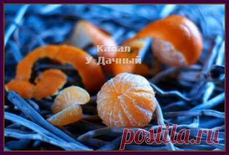 Почему нельзя выбрасывать мандариновые корки (советы опытных огородников)        Почему нельзя выбрасывать мандариновые корки (советы опытных огородников)  В преддверии Новогодних праздников, большинство из нас, по традиции покупают мандарины и апельсины, к праздничному сто…
