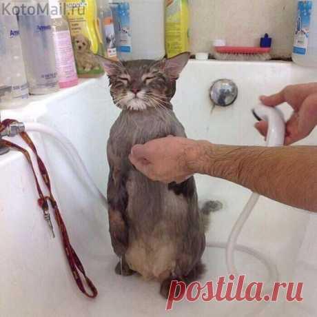 Послушный котик