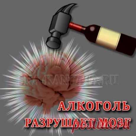 Алкоголь разрушает мозг: миф или правда