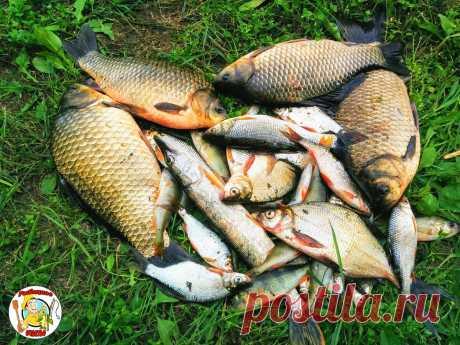 С помощью всего лишь одной долговечной приманкой наловил 11 кг рыбы. Теперь пользуюсь им каждый раз