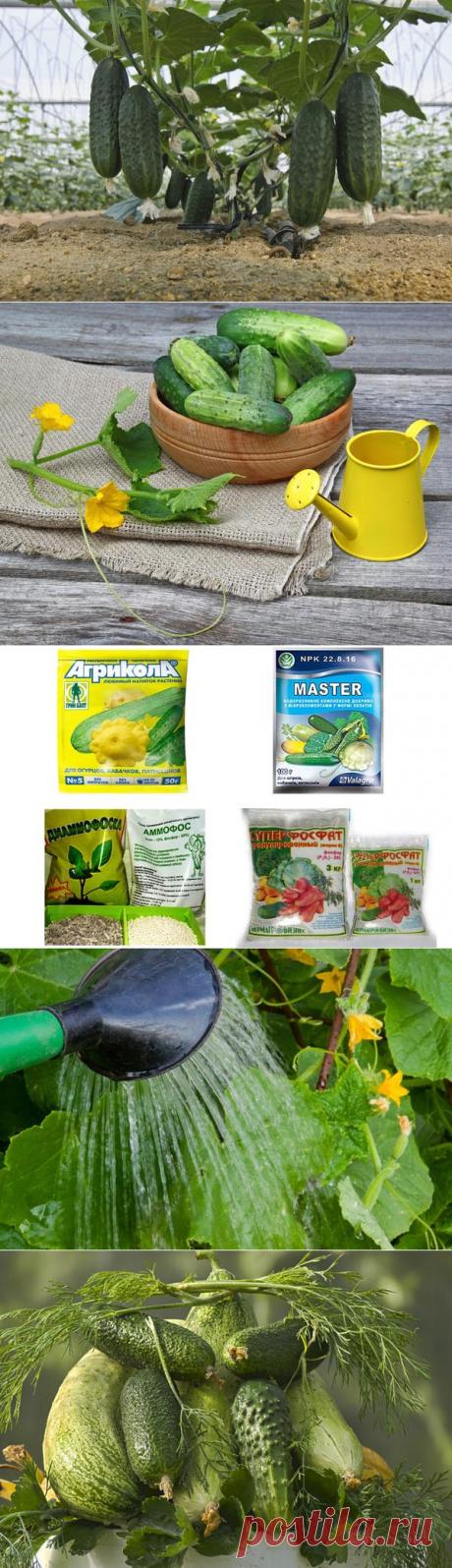 Подкормка огурцов: виды, формы и режимы подкормок