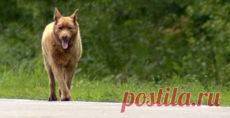 СМИ рассказали о собаке, которая каждый день приходит в город поздороваться с жителями / Новости / Моя Планета