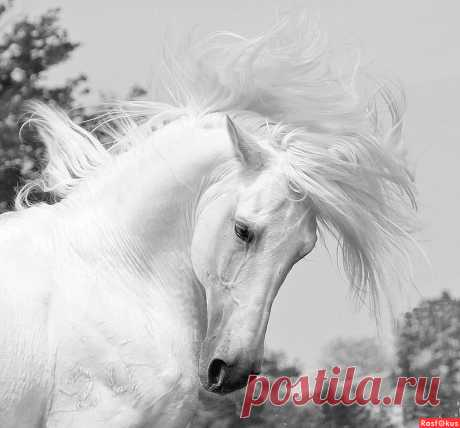 Фото: Почти единорог.... Елена Маракулина. Фото животных - Фотосайт Расфокус.ру
