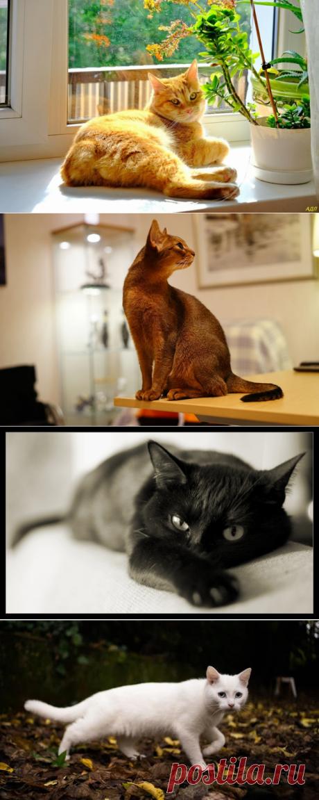 Народные поверья, связанные с кошками