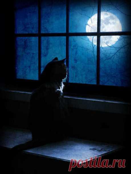 Пойдём, погуляем по лунной дорожке, Над городом, тонущим в дымке видений? Ты сможешь отведать небесной морошки, Ты сможешь услышать, как шепчутся тени.  Ты сможешь увидеть на лунных равнинах Несущихся вскачь лошадей звездногривых, На них нет уздечек и сёдел на спинах - Они так свободны, а, значит, счастливы.  Здесь можно комету поймать на ладошку... Присядем на лунно-серебрянном шёлке... Ты сделаешь вид, что влюблён... Понарошку... И сложатся пазлы из звёздных осколков…  А...