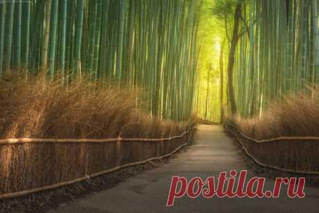 Фотография пользователя Данил Коржонов (KORDAN) - *** Бамбуковый лес *** из раздела пейзаж №5404150 - фото.сайт - Photosight.ru