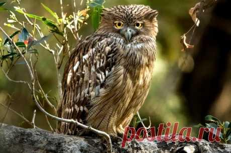«Мадам Софи». Национальный парк Рантхамбор, Индия. Автор фото – Владислав Бельченко: