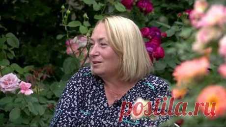 Видео о том, как выращивать розы! Сад роз Галины Баскаковой, советы по выращиванию роз!