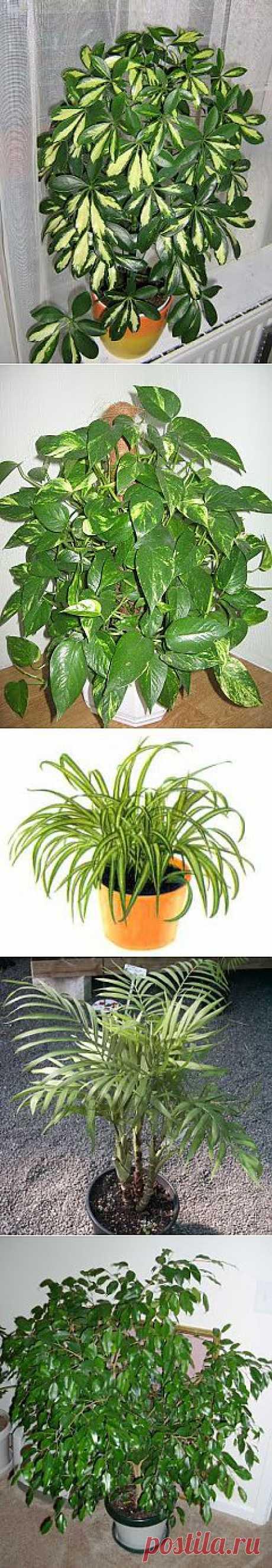 СПБ - Самый Полезный Блог: 7 растений которые освежают воздух лучше других