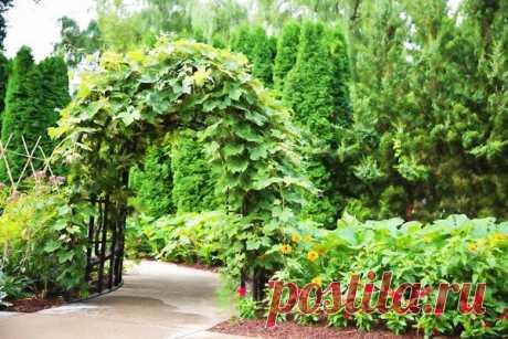 Вертикальное озеленение сада: 3 практичных способа