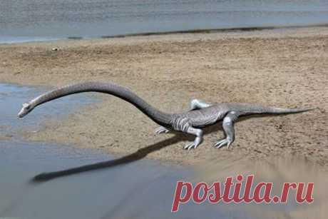 Тайну рептилии с трехметровой шеей раскрыли ученые Палеонтологи из цюрихского университета в Швейцарии раскрыли тайну рептилии, чья шея была в три раза длиннее туловища. Изначально специалисты думали, что это был летающий птерозавр с огромными крыльями, но оказалось, что существо обитало в воде. Оно принадлежит к роду Tanystropheus,...