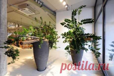 Лучшие неприхотливые растения для офиса. Список комнатных растений для офиса. Фото — Ботаничка.ru