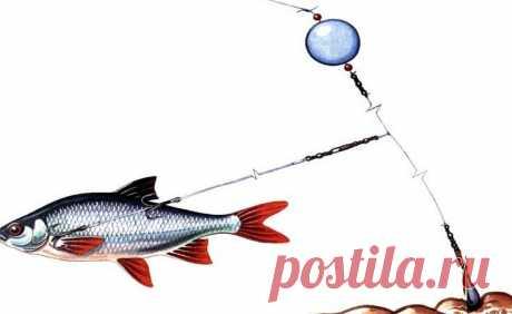 Отводной поводок с живцом. Легальная ловля во время нерестового запрета. | Блоги о даче и огороде, рецептах, красоте и правильном питании, рыбалке, ремонте и интерьере