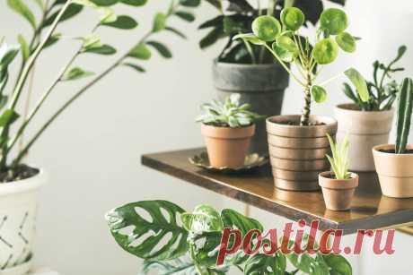 Лучшие цветы для дома: список самых практичных и лучших растений