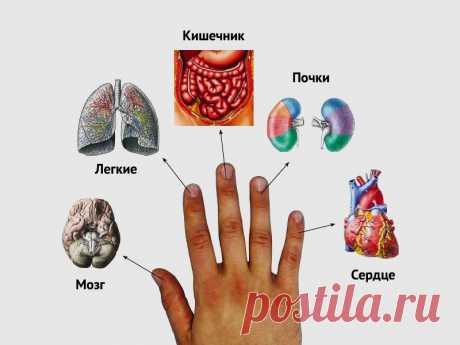 Каждый палец связан с двумя органами: японский метод лечения за 5 минут! Крутой метод!