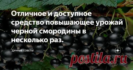 Отличное и доступное средство повышающее урожай черной смородины в несколько раз. Из ягод черной смородины можно приготовить большое количество  разнообразных зимних заготовок. Это может быть варенье, компот, джем или  же просто замороженные ягодки. Но для того чтобы все это приготовить,  необходимо иметь хороший урожай смородины. Большинство дачников практически не ухаживают за кустами, только  обрезают ветки. Как правило, такой уход не приносит отличного урожая.  Ягоды, конеч