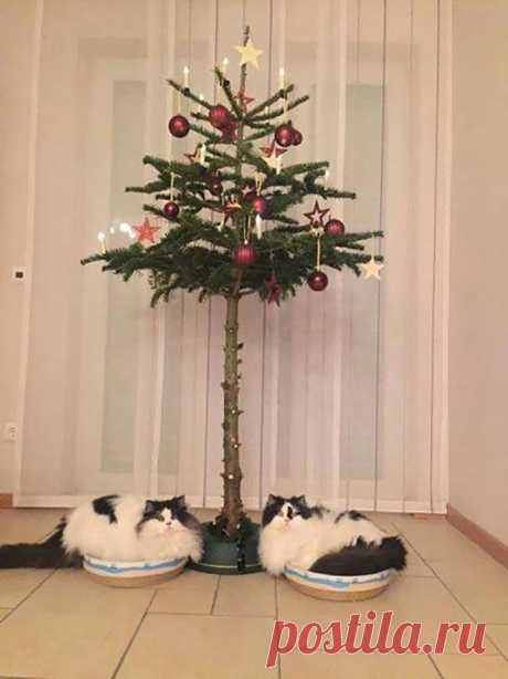 Genius Hacks to Cat-Proof Your Christmas Tree - Meowingtons