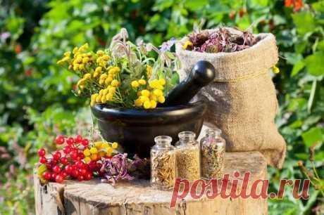 Травяные сборы для лечения бронхита  Антисептический травяной сбор. Возьмите в равных соотношениях листья шалфея, почки сосны, листья подорожника, цветки бузины черной, корень солодки,. Перемешайте травы и приготовьте настой или отвар. Возьмите две столовые ложки травяного сбора и заварите стаканом кипящей воды. Накройте крышкой и оставьте так на пятнадцать минут. Показать полностью…