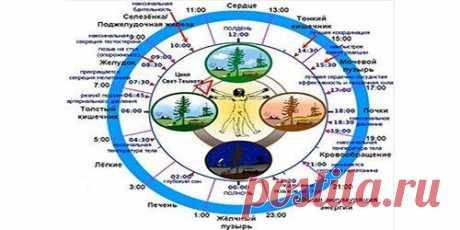 Биологические часы организма человека по часам работы. Биологические часы организма человека по часам работы. Как восстановить свои биологические часы? Почему лучше начинать свой день в 6 часов утра? Почему телу