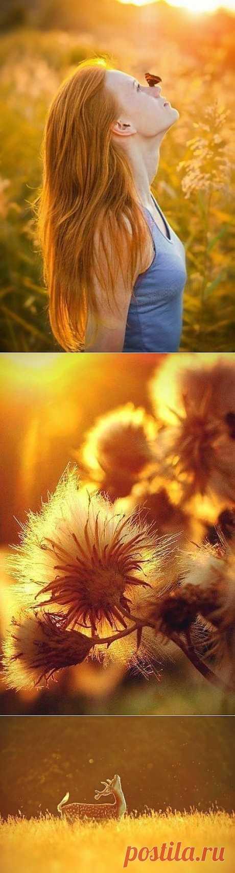 Вдохновение цветом: золото солнца