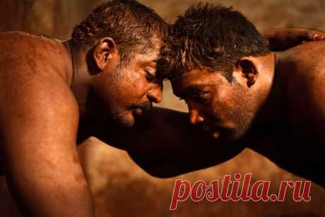 На протяжении всей карьеры борцов ждут ежедневные тренировки, строгая диета и безбрачие. Фотопроект об индийских рестлерах