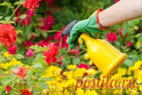 Откажитесь от использования зеленки, йода, марганцовки, аспирина и борной кислоты в своем саду-огороде. Объясняю, почему...   Жизнь хорошА!   Яндекс Дзен