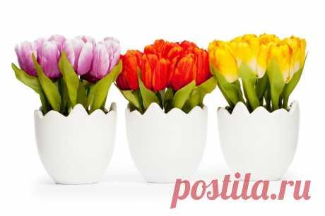 5 правил успешной выгонки луковичных растений / Журнал садовода Samdolis / 7dach - Клуб любителей дачи