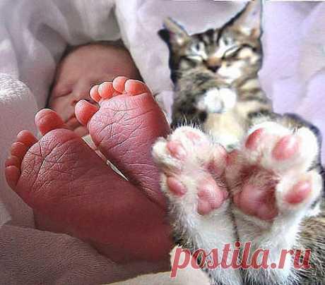 Детство - это когда твой кот старше тебя....))