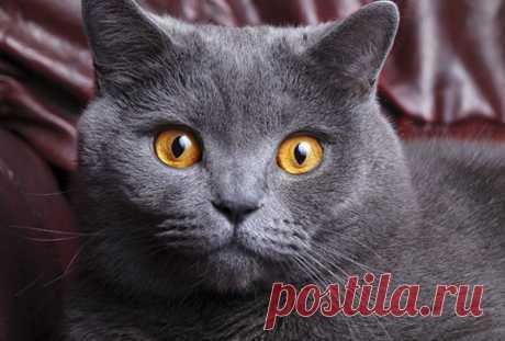 Кошка — показатель благополучия человека
