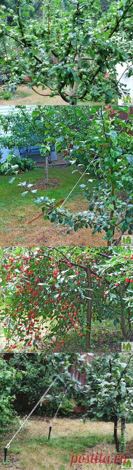 Работы в саду летом.   Дачная жизнь - сад, огород, дача