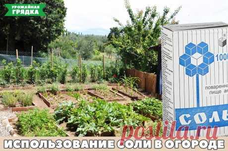 Применение соли на дачах и огородах