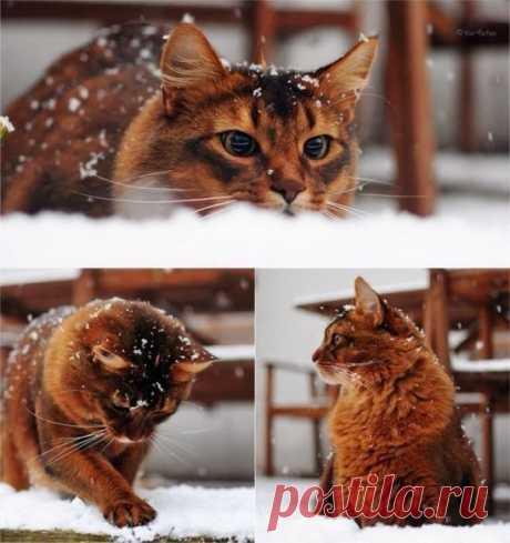 Зимние развлечения | KotoMail.ru