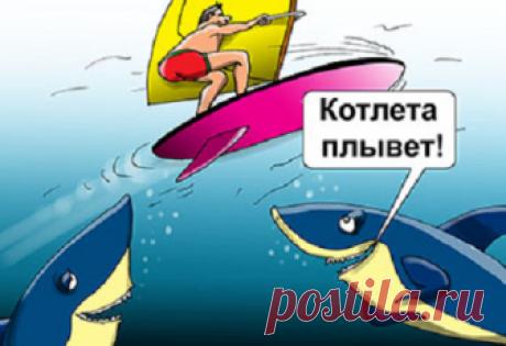 Анекдоты недели от ООО «Кодаки Трейд» (18.06.2018-24.06.2018)