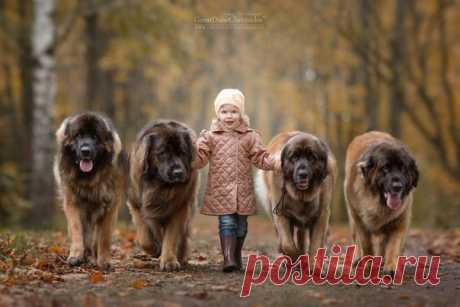 «Маленькие дети и их большие собаки» — фотопроект Андрея Селиверстова.
