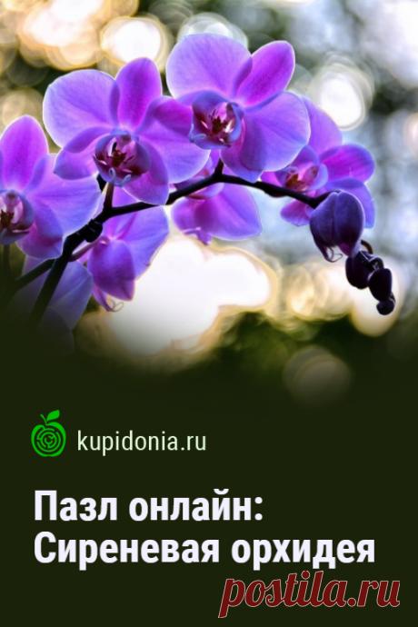 Пазл онлайн: Сиреневая орхидея. Красивый пазл онлайн с сиреневой орхидеей. Собирайте пазлы на сайте! Тренируйте свой мозг!