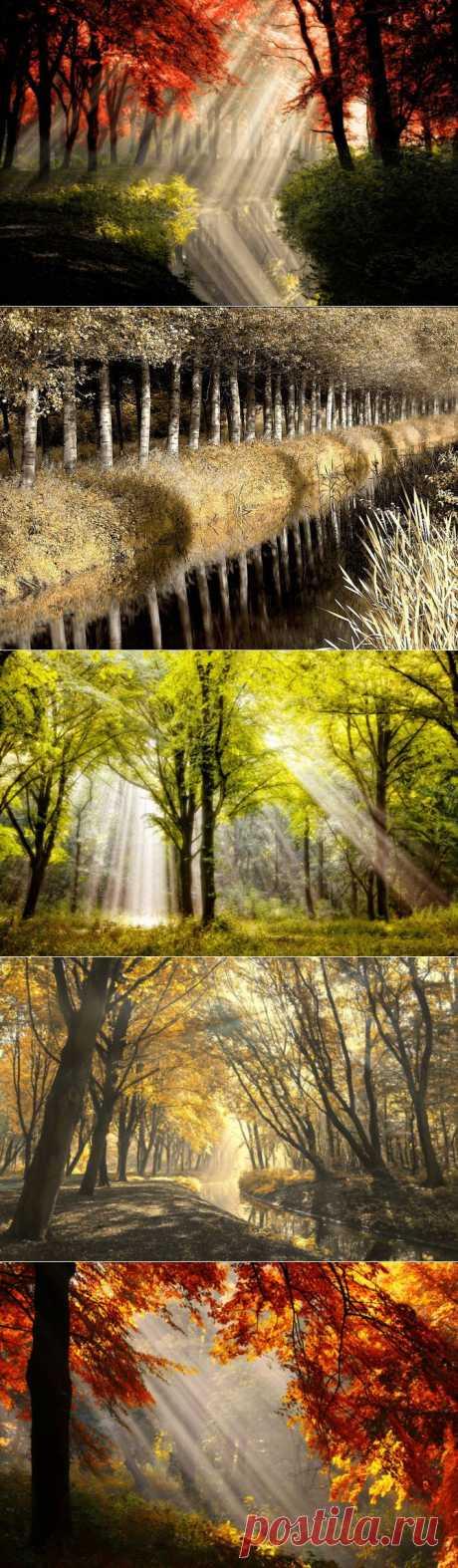 (+1) тема - Фотограф Ларс Ван де Гур. Золотая осень.   Искусство