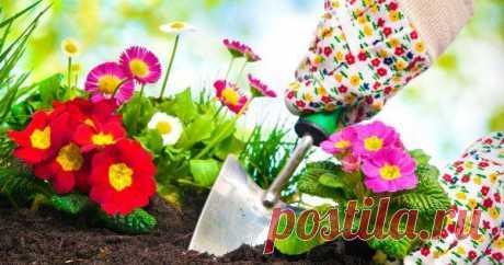 Календарь посадки многолетних корневищных цветов Астры, ирисы, канны, лилейники – рассказываем о сроках посадки 19 популярных многолетних цветов, которые размножаются делением корневища. Сохраните себе, чтобы не потерять!