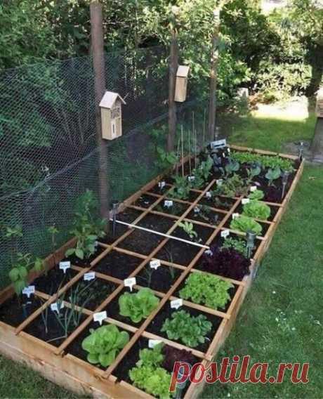 Интересные идеи для сада и огорода.