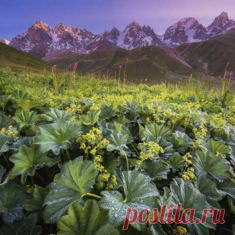 Северная Осетия. Автор фото: Антон Агарков.