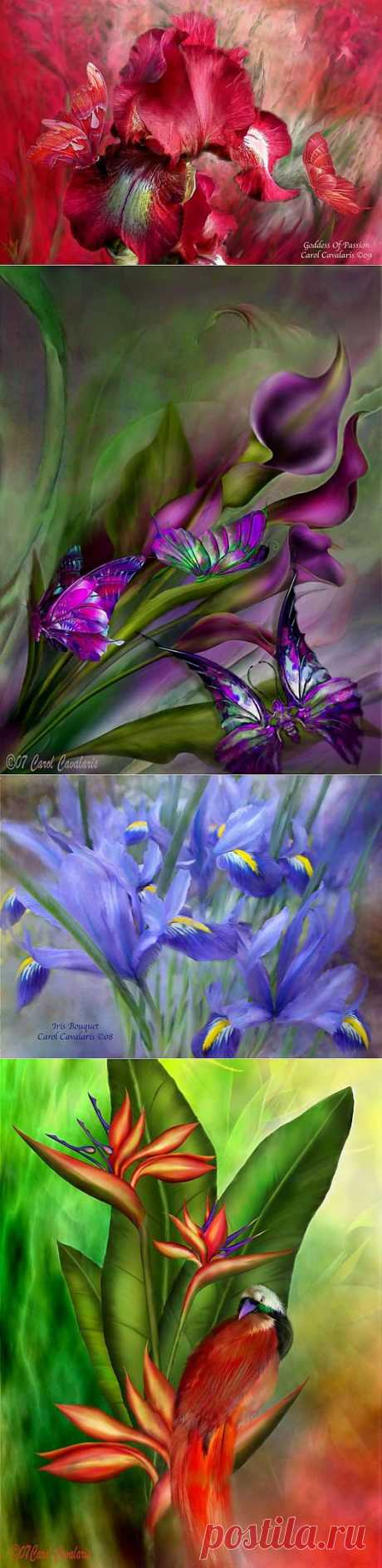 Цветы - Carol Cavalaris.