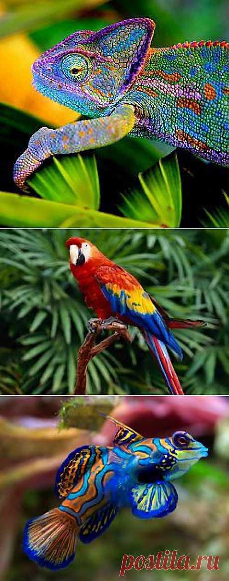 10 самых красочных животных