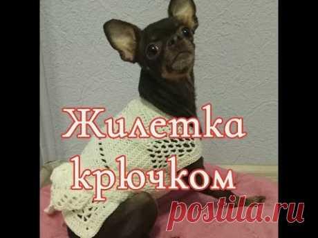 Жилетка крючком, crochet for dogs