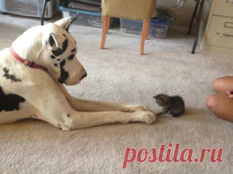 Дружить как кошка с собакой!