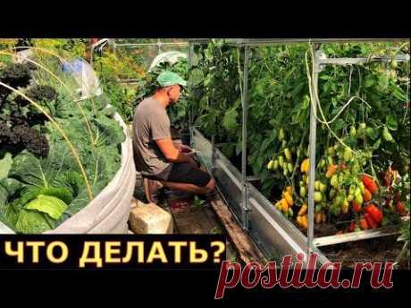Нет теплицы, растения БОЛЕЮТ. ВЫХОД ЕСТЬ!