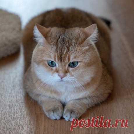 Пять самых плюшевых котиков инстаграма :3