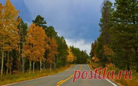 дорога лес осень Скачать картинку 2560x1600 дорога лес осень