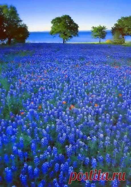 Virágok - Google+