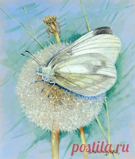 Нежная акварель. Цветы и бабочки. Художник Gordon Beningfield - Танец с веерами